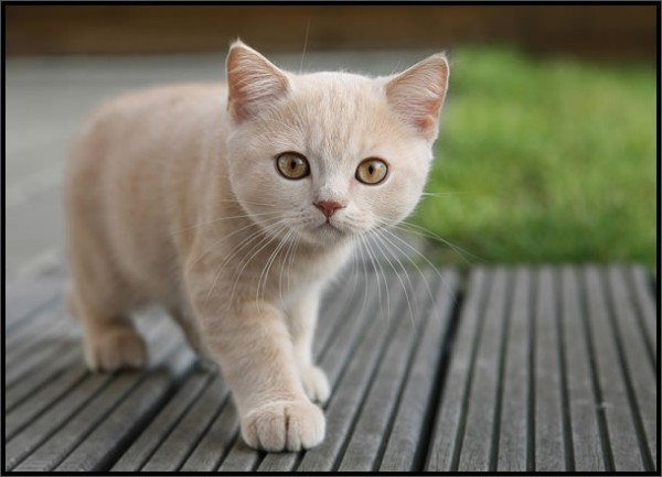 larita: Gatito